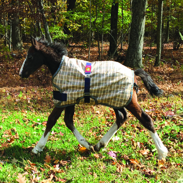 Baker 200 Fill Expand-O-Blanket Foal Pony Turnout style for the little ones: for ponies and fast-growing foals