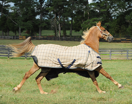 200 Fill Baker Midweight Turnout Blanket
