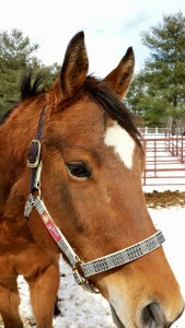 Olivia McElwain's horse, Riley, looks SO CUTE in his new Baker halter!