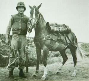 Sgt. Reckless in battle with fellow Marine, Sgt. Latham